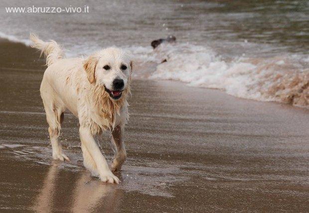cani-spiaggia