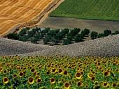 foto3-10-170x128 Panoramica Abruzzo - 2