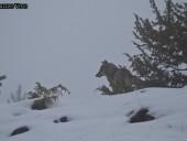 foto3-42-170x128 Panoramica Abruzzo - 2