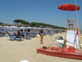 Pineto estate 2007 e 2008 - Foto in libertà