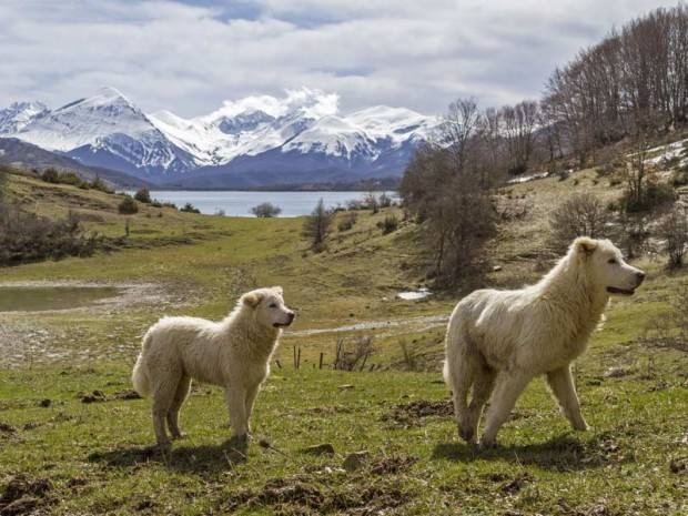 Parco_Nazionale_d_Abruzzo-620x465 Nasce il Parco Nazionale d'Abruzzo