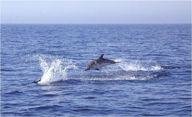 delfini_a_torre_cerrano