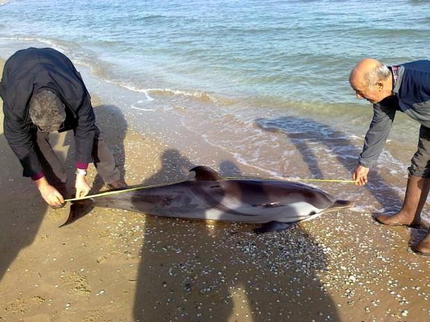 delfino-cerrano