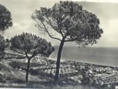 pineto-1959