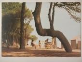 pineto-1989