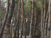 emergenza-16-170x128 Nubifragio in Abruzzo. A Pineto ingenti danni