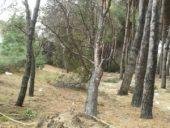 emergenza-21-170x128 Nubifragio in Abruzzo. A Pineto ingenti danni