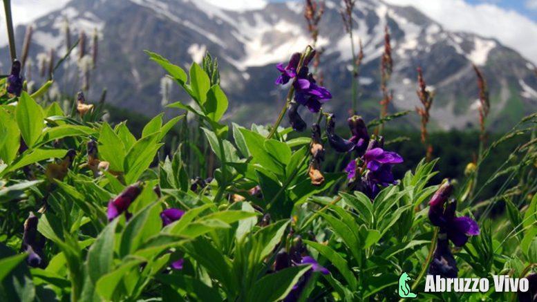 biodiversita Tutela delle biodiversita' colturali e agronomiche. Parco Nazionale del Gran Sasso e Monti della Laga